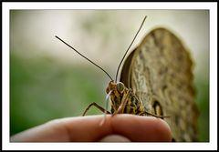 Tocco di farfalla