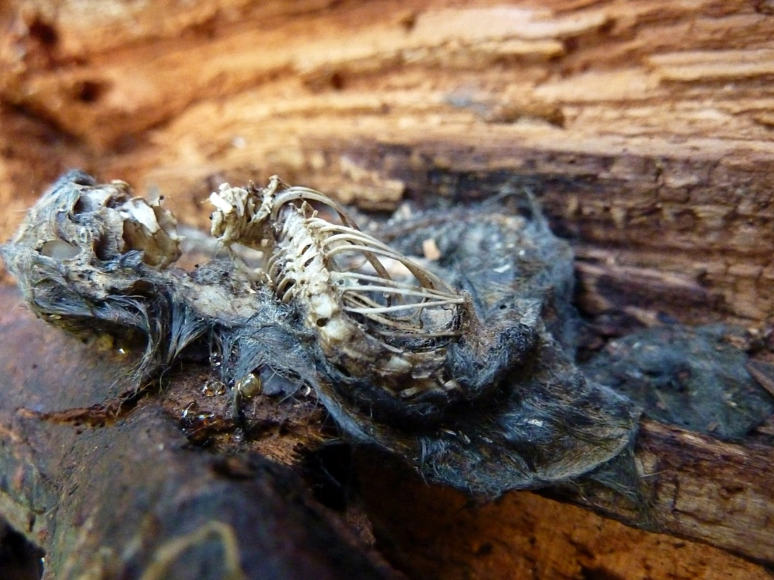 Tod auf Holz