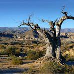 Tod in der Wüste von Tabernas