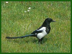 Todesvogel oder Götterbote (2)