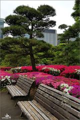 Tokyo IV