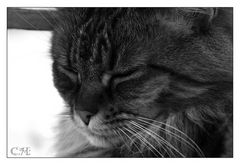 Tolle Katze 02