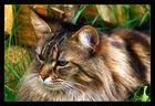 Tolle Katze 03 :-)