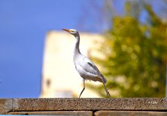 toller Vogel bei mir in Garten