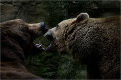 tollpatschige Versuche zweifelhaften Nachahmungsverhaltens von Wildtieren in Gefangenschaft