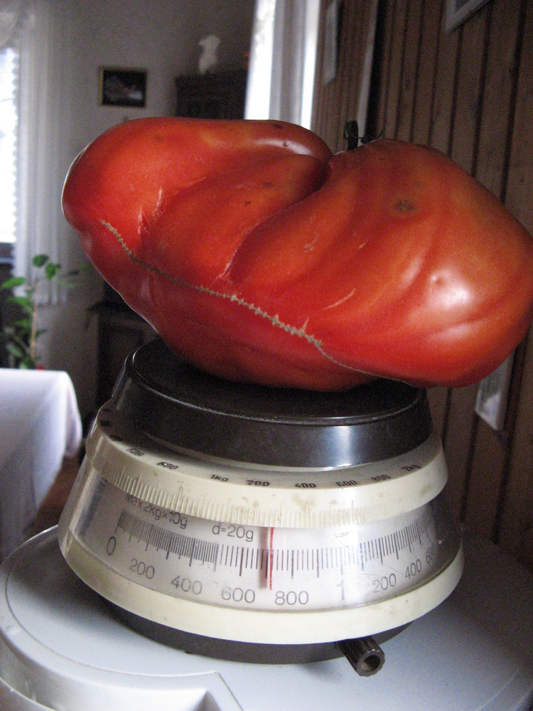 Tomate 700g