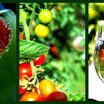 Tomaten im August