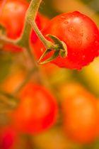 Tomaten im Garten