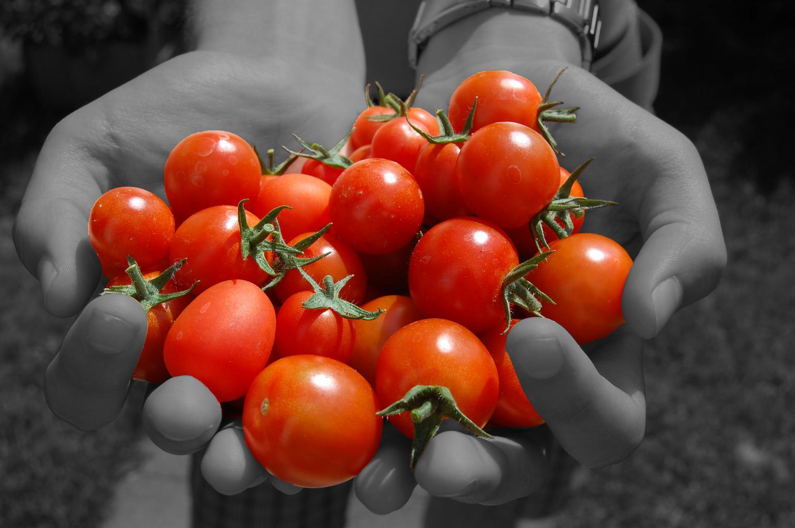 Tomaten Schwarz/Weiss
