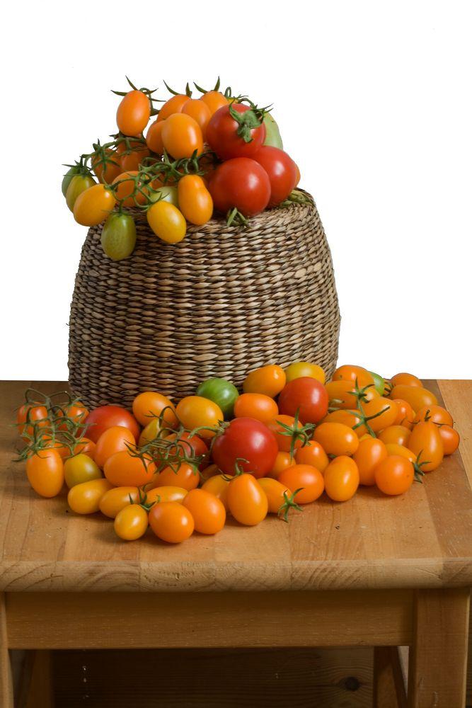 Tomaten_3