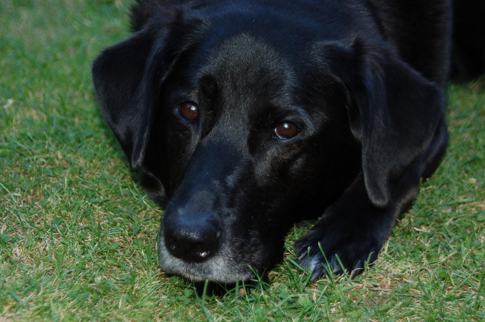 Tona -my sweet dog :3