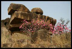 ... Tongo Hills, Ghana ...