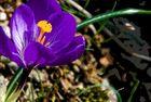 Tonwerttrennung - Frühlingsdetail II
