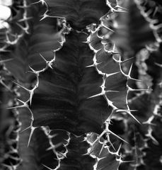 Topographische Kaktuskarte