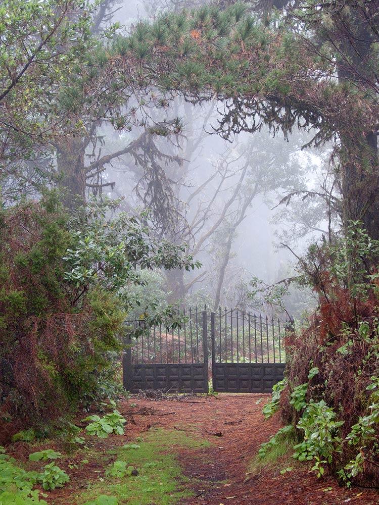 Tor im Nebel