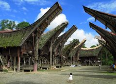 Toraja Kultur auf Sulawesi 300km nördl.von Makassar