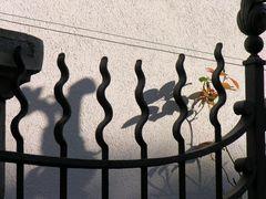 Torgitter mit Schattenspiel auf der Mauer