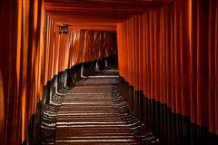 Torii im Inari Schrein