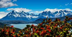 Torres de Paine NP                                        DSC_6061-3