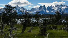 Torres del Paine                                DSC_6073-3