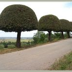 Torri en Toscane près de Rosia