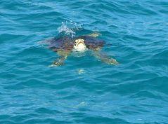 tortue nageant près du bateau
