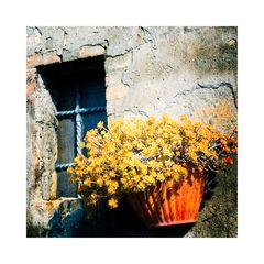 Toscana 7