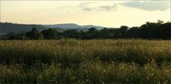 Toscana Feld