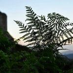 Toscana-Grün