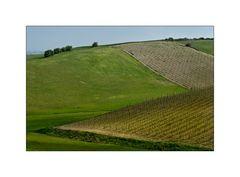 Toscana in Primavera