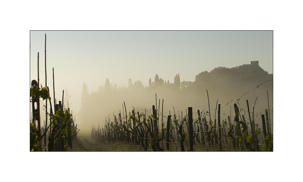 Toscana in primavera IV