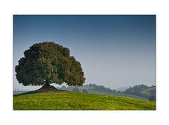 Toscana in primavera V