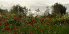 Toscana in primavera VII