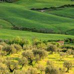 Toscana, Monticchiello. (4)