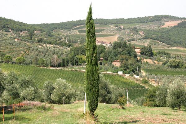 Toskana-Impression