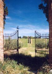 Toskana-Landschaft (Region Montalcino) III