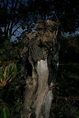 Toter Baum 2