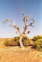 Toter Baum!