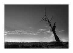 Toter Baum am Rand.