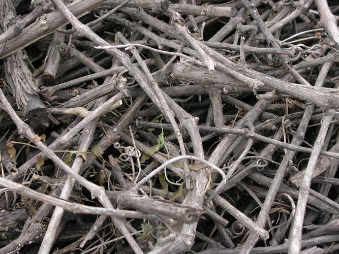 totes Holz nach der Weinernte