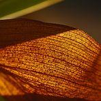 Totes Orchideenblatt