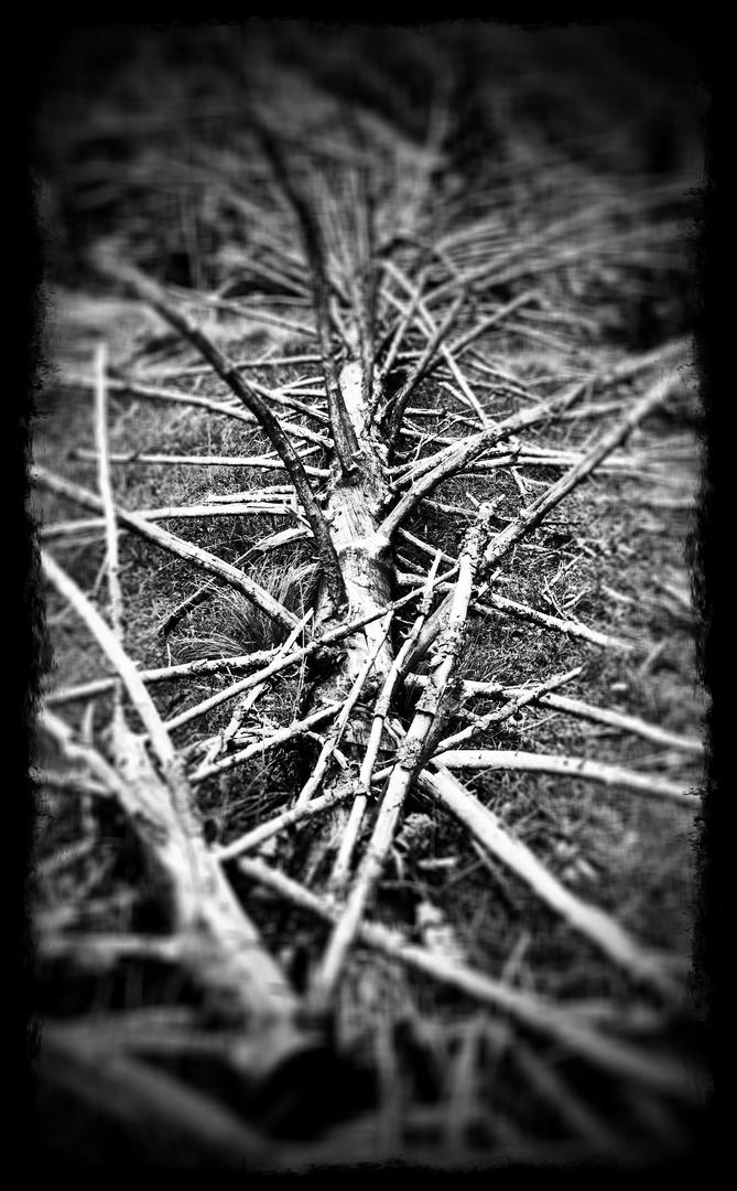 Totes_Holz