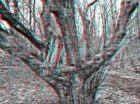 Totholz 3D