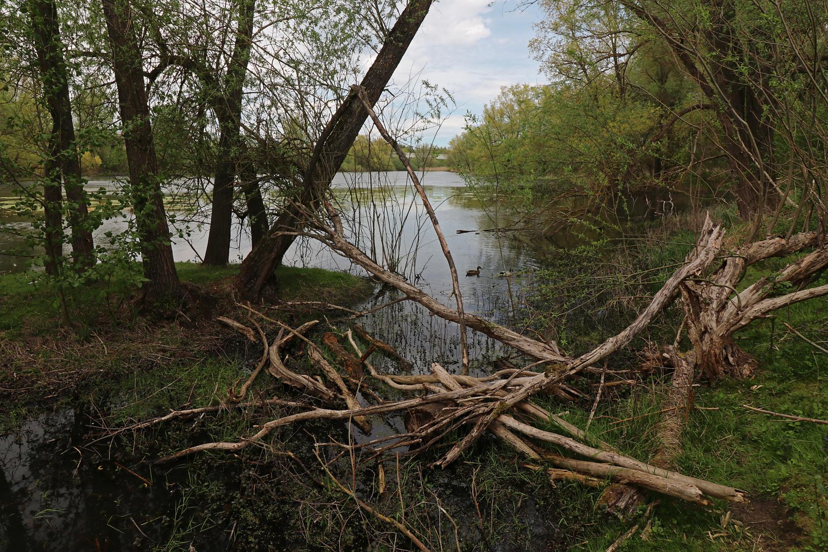 Totholz am Ufer