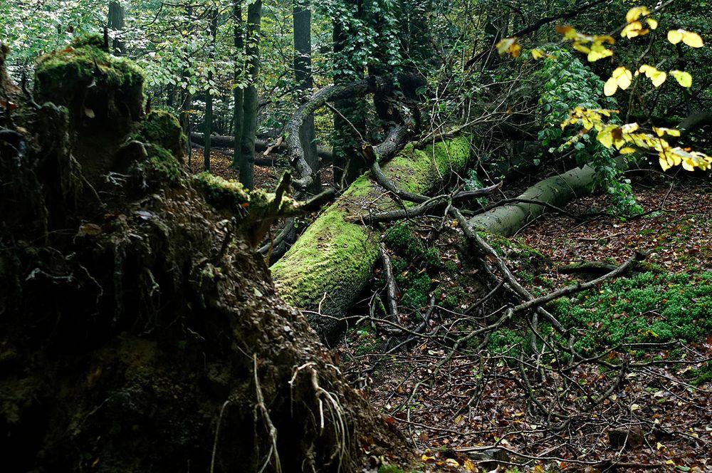 totholz im saarbrücker urwald foto  bild  deutschland