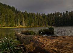 Totholz im Wasser - bois mort dans l'eau