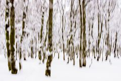 Tourmente hivernale