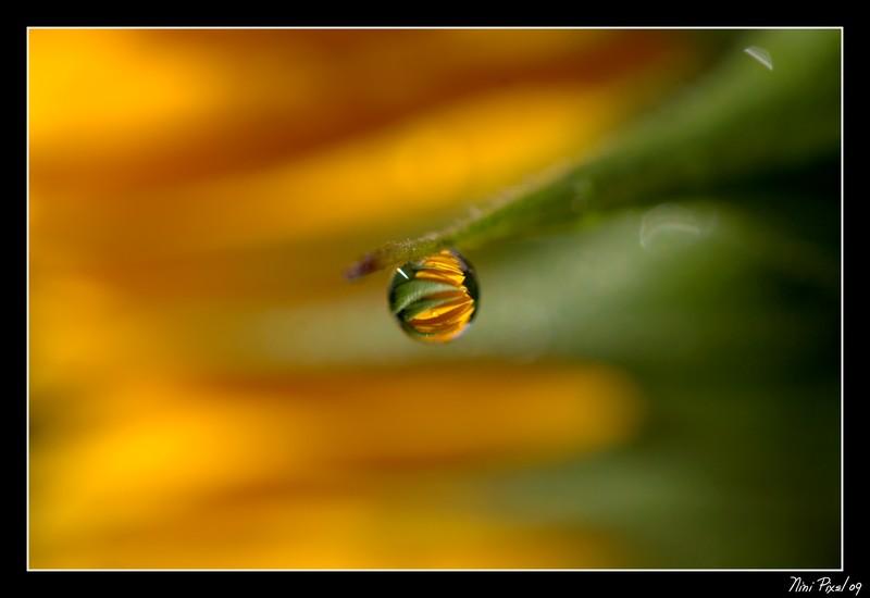Tournesol - Sunflower
