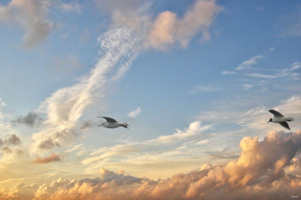 Towards the Secret Sky.