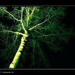 Toxic tree